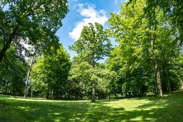 Waldlichtung im Frühling mit frischem Grün