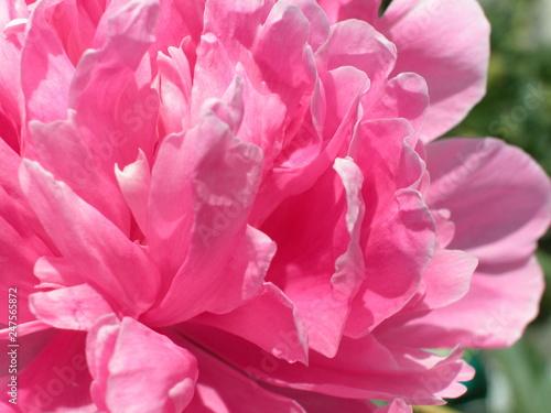 Kwiaty - 247565872