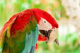 Colorful exotic parrot closeup