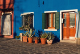 Lovely house facade with succulents in Burano, Italy - 247599450