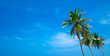 Coconut tree on the sky background - 247609426
