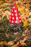 red-eared turtle on autumn leaves. Turtle with a red festive cap