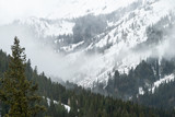 Forest and snowy mountain landscape