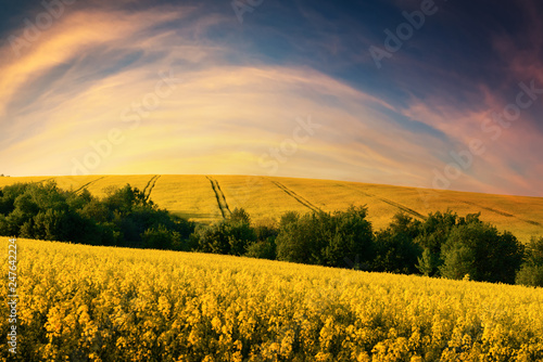 Foto Murales Colorful sunset on yellow rape field. Landscape photography