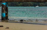 Fototapeta Fototapety z morzem - PONTON  DU LAGON  DE MOOREA © alexa