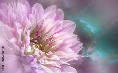 Blumenstern - 247650631
