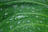 Beading Water Drops - 247666451