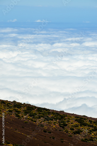 High Clouds over Pine Cone Trees Forest - 247690633