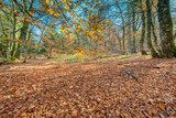Fototapeta Las - Forêt en automne © bios48