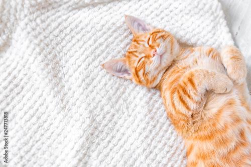Ginger cat sleeping - 247713818
