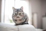 Fototapeta Zwierzęta - Katze sitzt auf dem Sofa © S.Kobold