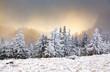 Leinwandbild Motiv winter landscape with snowy fir trees in the mountains