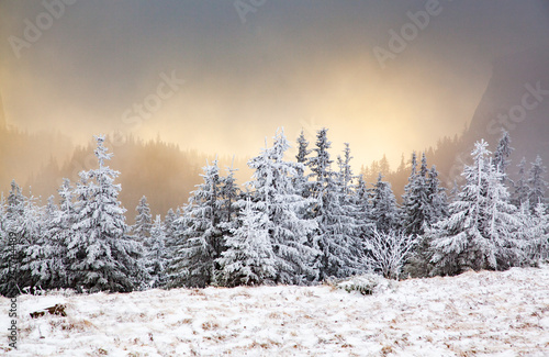 winter landscape with snowy fir trees in the mountains - 247744489
