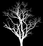 white bare large tree silhouette on black - 247750895