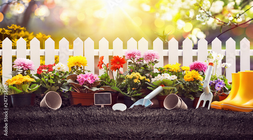 Gardening Concept. Garden Flowers and Plants on a Sunny Background - 247756620