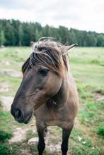 "Постер, картина, фотообои ""Portrait of a Wild Horse"""