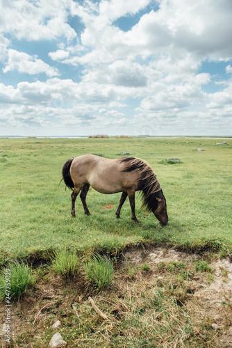 Horse Grazing in Open Field