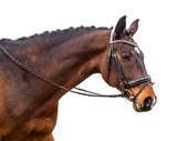 A portrait of a bay horse isolated - 247825650