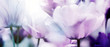 Leinwanddruck Bild - tulpenblüte in hellem licht