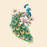 Watercolor peacock vector illustration