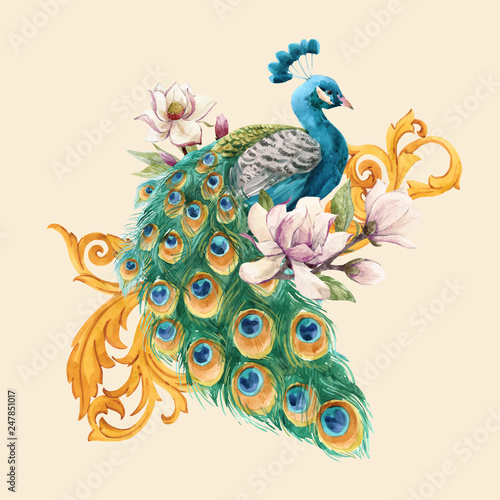 Fototapety, obrazy : Watercolor peacock vector illustration