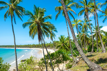 Bright scenic view through coconut palm trees to a beautiful tropical palm-fringed, wide golden sand beach bay in Bahia, Brazil.