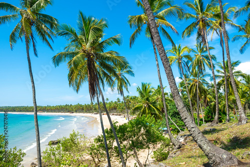 Bright scenic view through coconut palm trees to a beautiful tropical palm-fringed, wide golden sand beach bay in Bahia, Brazil. - 247878416