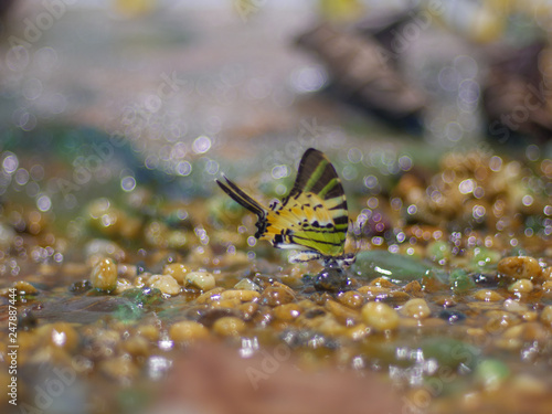 Foto Murales Selective focus beauty butterfly with bokeh background. (Soft of focus)