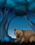 A quokka in dark forest