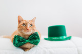 Cat with props for St Patricks Day