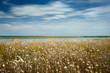 Beautiful summer landscape - wildflowers, lake and beautiful sky.