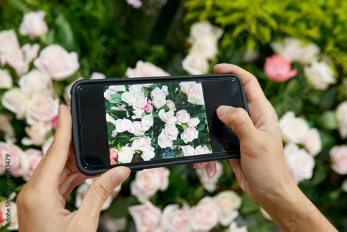 Woman photographing roses - 247913479