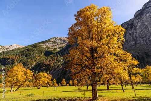 Grosser Ahornboden, Karwendel, Tyrol, Austria - 247936470