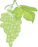 Grapes Vector Illustration - 247942227