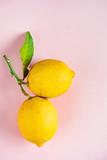 organic ripe lemons on the pink background