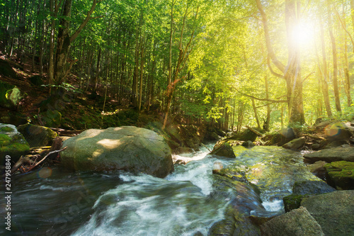 Leinwanddruck Bild forest stream among the rocks. beautiful summer scenery on a sunny day. wonderful nature background. refreshing rapid flow in sun rays