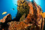 Coral reef scenics of the Sea of Cortez, Baja California Sur, Mexico.  - 247959478