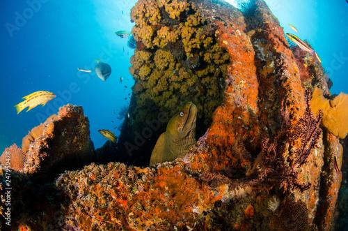 Leinwanddruck Bild Coral reef scenics of the Sea of Cortez, Baja California Sur, Mexico.