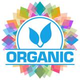Organic Colorful Squares Floral Circular Text  - 247968616