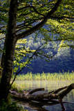 Lake Hinterer Langbathsee, Ebensee, Salzkammergut, Upper Austria