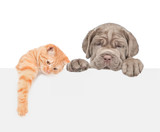 Cat and dog over white banner. isolated on white background - 247982606