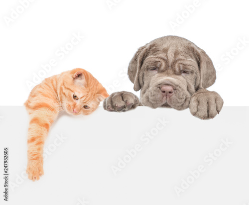 Cat and dog over white banner. isolated on white background