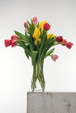 bouquet of tulips in glass vase on white - 247990438