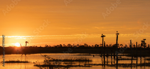 Sunrise over a Florida Wetland
