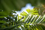 Tropische Blätter verschiedener Palmen