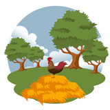 Roosters in the farm scene. Flat vector illustration