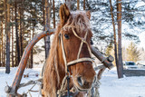 Image with a horse - 248003662