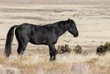 Majestic Wild Horse in the Utah Desert in Winter
