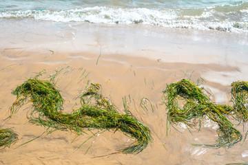 green algae lie in a heaps on the sandy seashore