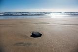 sasso sulla riva del mare - 248062875